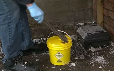 Calgary Alpha House Society streamlines needle response in collaboration with The City